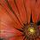 Thumbnail: Red Gerbera Daisy.