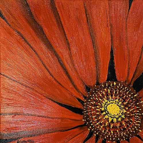 Red Gerbera Daisy.