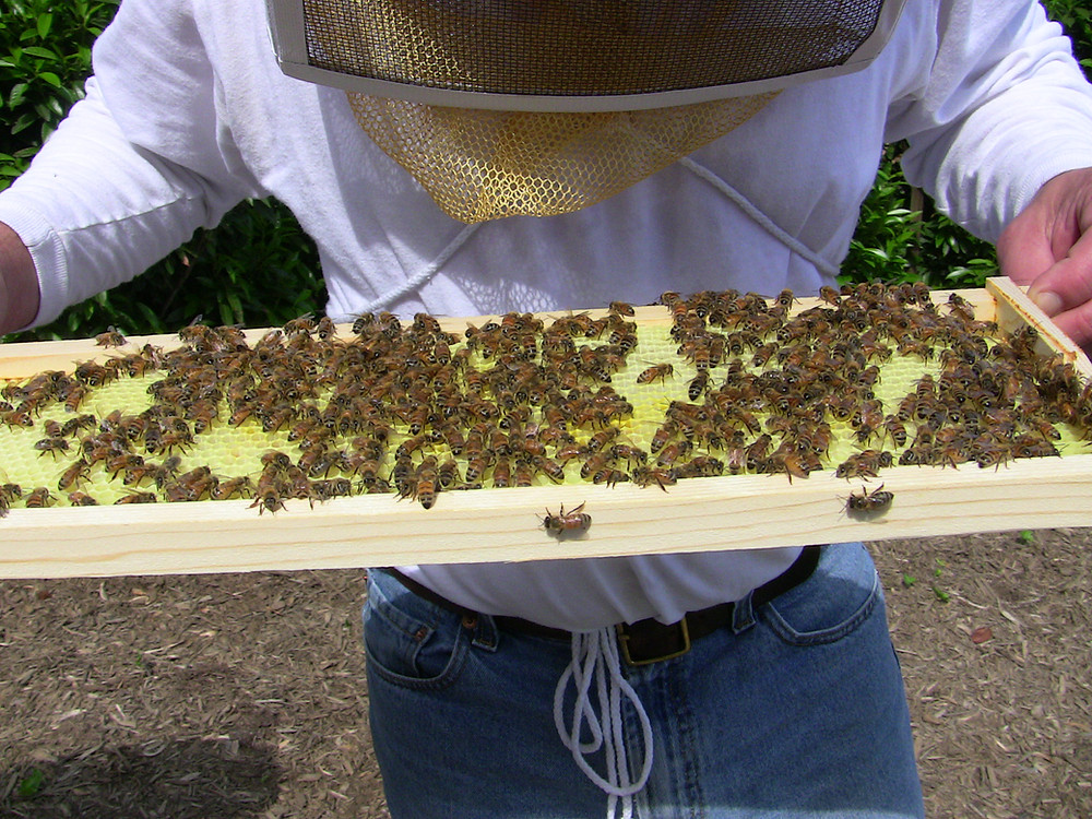 CEO Richard Scheper with his bees
