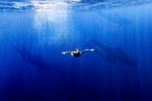 pilotwhales-smaller.jpg