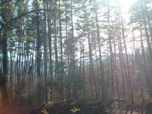 林間に南アルプスを望む