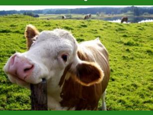 Esteio | 2ª Feira Vegana de Esteio