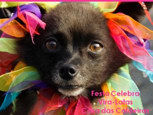 São Paulo: Festa Celebra Vira-Latas na Casa das Caldeiras