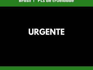 Brasil  | PLs de crueldade