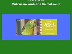 Itatiba | Mutirão no Santuário Animal Sente