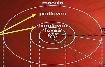 Figure 6 B .jpg