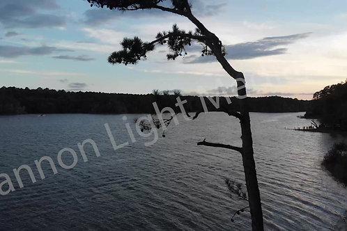 Lake & Tree