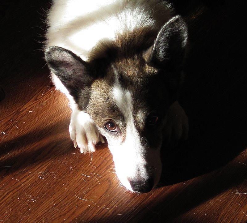 Phoebe in light