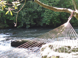 river hammock