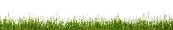 GRASS STRIP.jpg