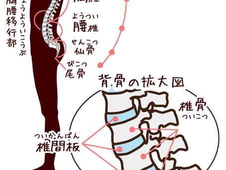 なぜ腰痛になるの??② 城東区てつかわはりきゅう整骨院