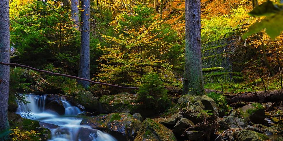 Wanderung im Monbachtal