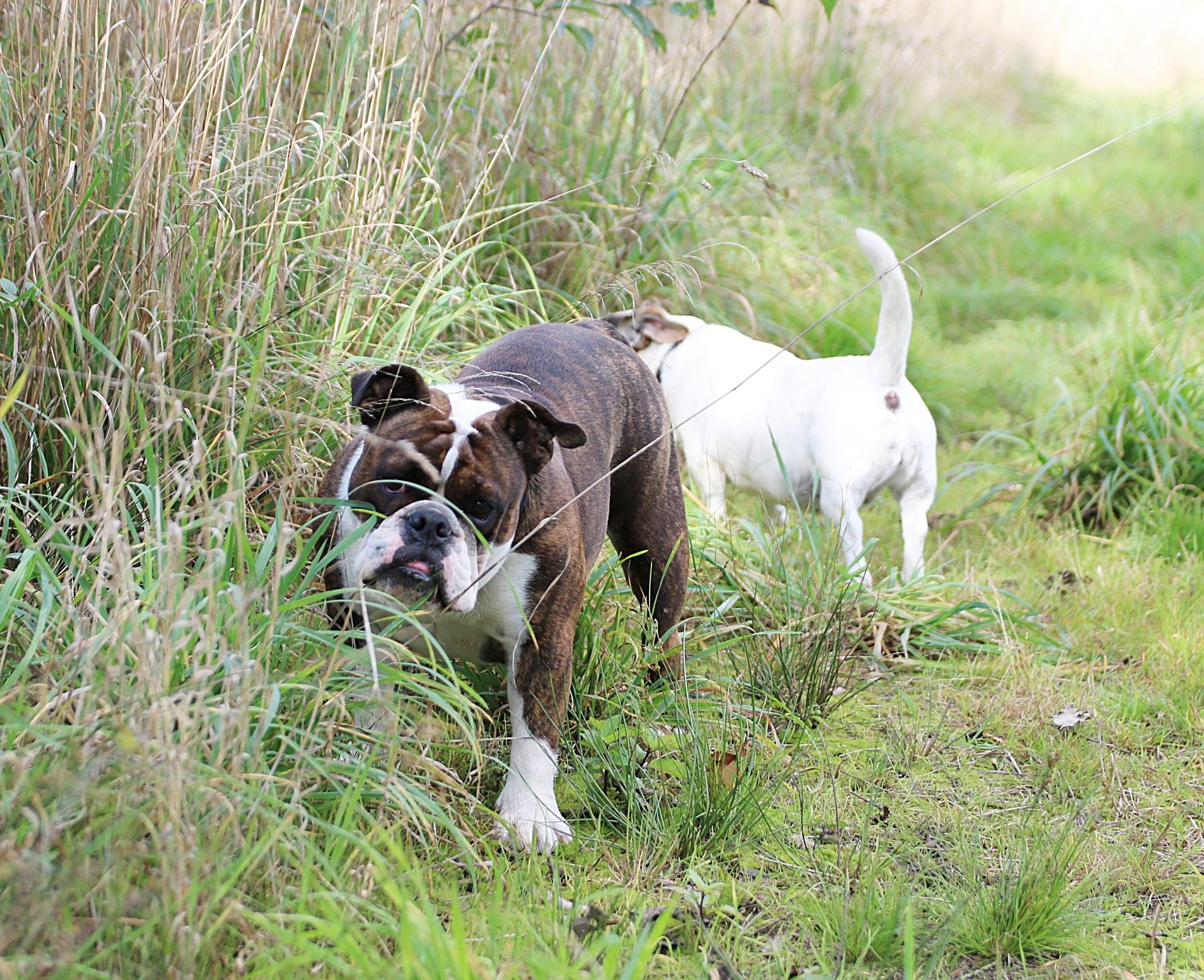 Holly beim Waldgang mit Lucie