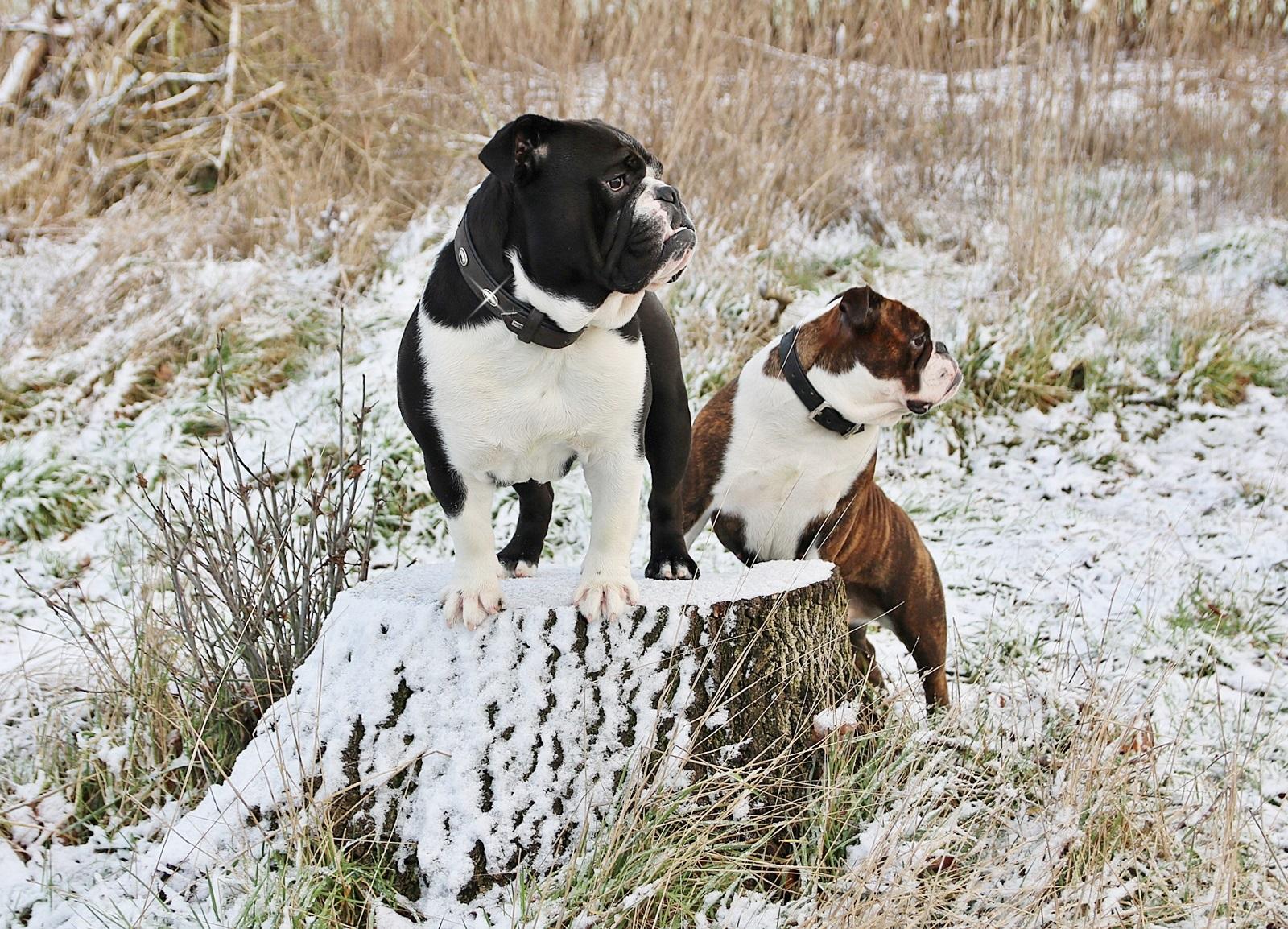 Holly & Sir Henry