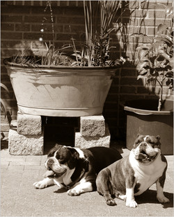 Holly & Henry warten