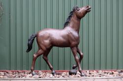 Dieses Pony frisst kein Brot!