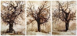 brou de noix sur papier - 3 x ( 24 x 32 )