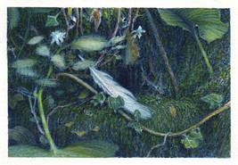aquarelle sur papier - 15 x 10