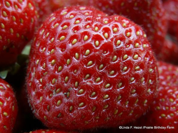 heirloom strawberry