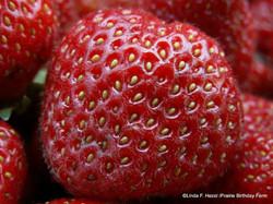 heirloom strawberry
