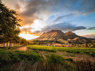 The Wild Wines of South Africa