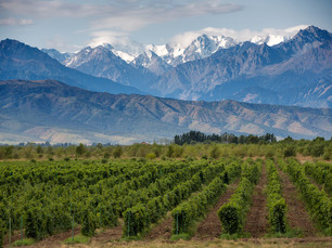 Making the Case: Much More Than Malbec