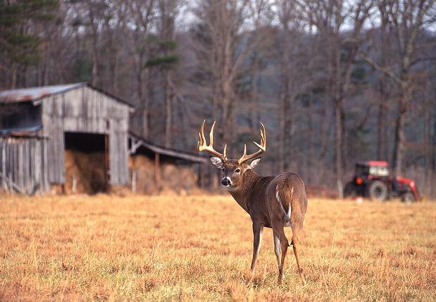 Hunting_deer.jpg