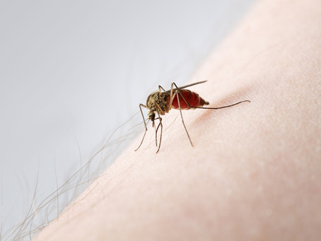 The Zika Virus: Protection Measures and Choosing the Right Mosquito Repellant
