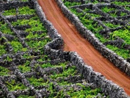 Vinhos Açorianos
