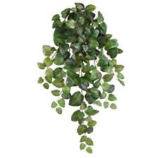 Instead Try: Swedish Ivy (non-toxic)