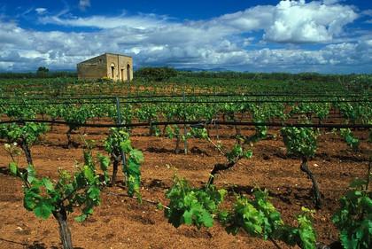 Sicilian wine.jpg