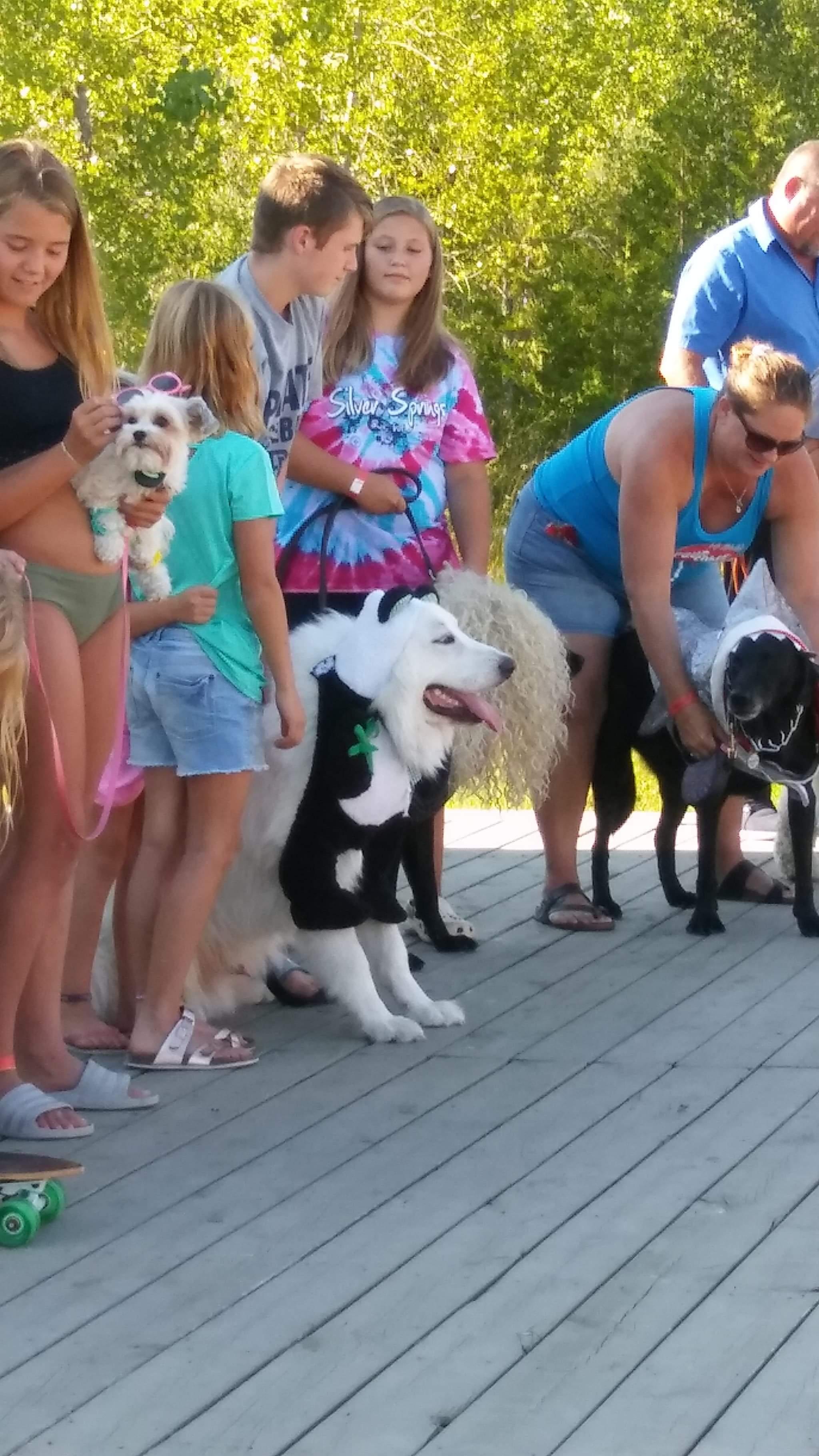 Pet Contest 16