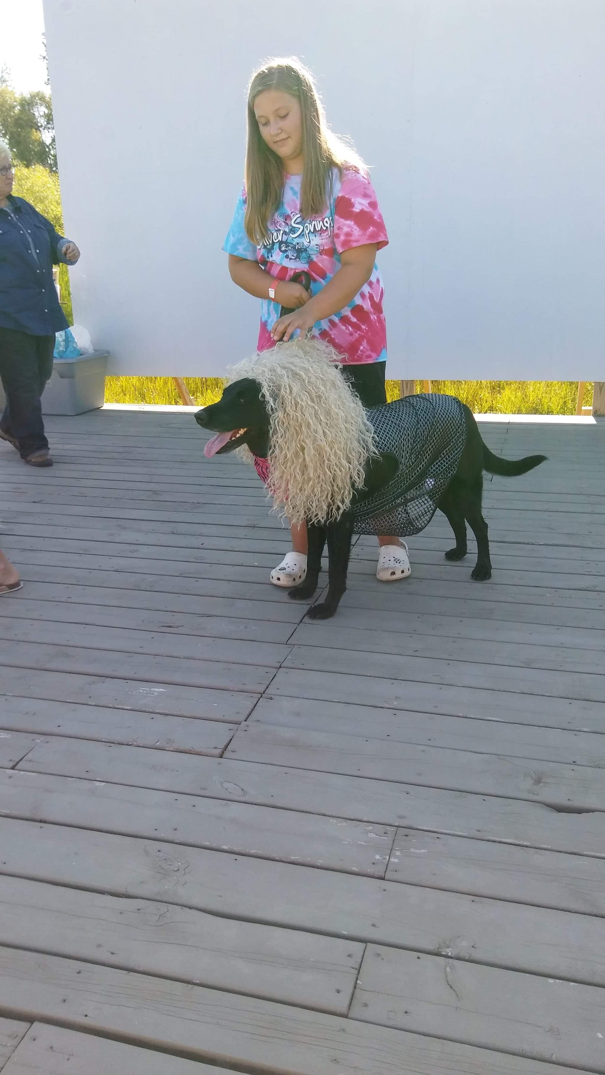 Pet Contest 2