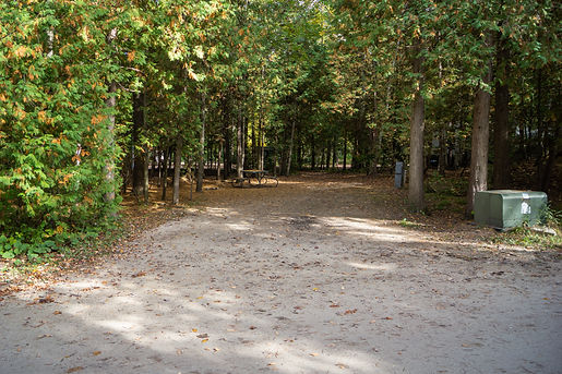 Wooded Back In Site 110.jpg
