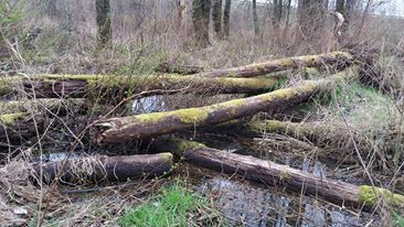 A surveyor's bridge in a wetland.