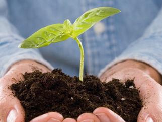 Проведение Дней экологической безопасности в учреждениях образования Перевальского района