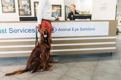 Animal_Eye_Services_Full_Size-43