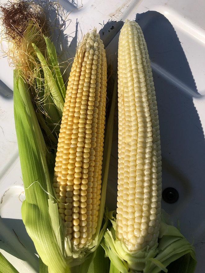 agri-bac Corn.jpg