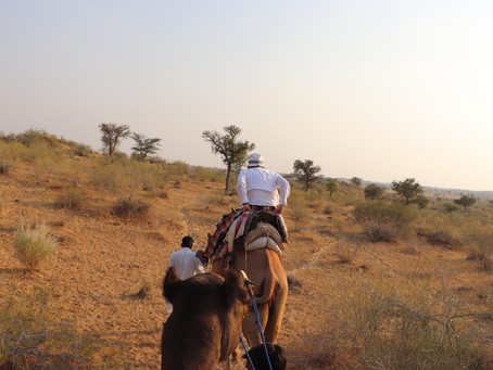 Humps and Lumps—Our Camel Safari in an Indian Desert.