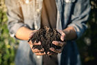 Hand holding soil,Hand dirty with soil.