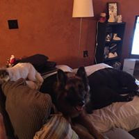 Dog Boarding Overnight