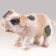 Grunting Pig