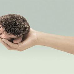 Mini Hedgehog