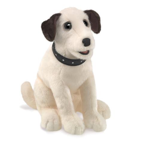 Sitting Terrier Dog