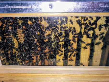 Viele Bienen - mehr Bienen
