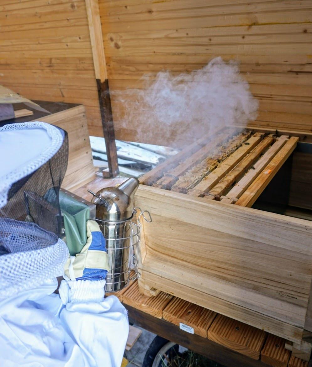 Imkernachwuchs (Kind) mit Smoker an Bienenbeute