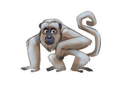 Mono Carayá 3