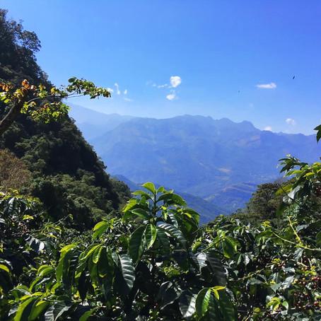 TRIP REPORT: COSTA RICA & GUATEMALA