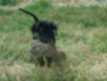 puppybird.JPG
