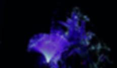 Screen Shot 2018-07-26 at 12.31.51 PM.pn